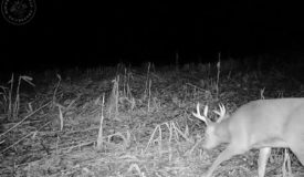 Buildable Hunting Land with Income Options Jackson County WI