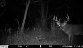 Buildable Hunting Land on Dead-End Road in Richland County, WI