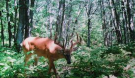 Secluded Trophy Hunting Property Jackson County WI