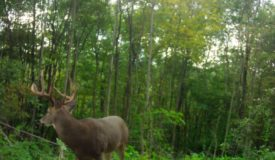 Deer and Turkey Hunting Land Richland County Wisconsin