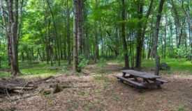 Marquette/Green Lake Co 77 Acre Hunting Property For Sale