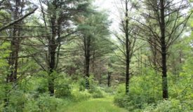 Wooded Property with Hunting Stands in Place Clark County WI