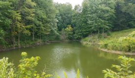 Prime Hunting and Recreational Property in Monroe County WI