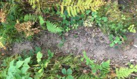 Recreational Hunting Property in La Crosse County Wisconsin