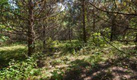 80 Ac Hunting Land Adams County.