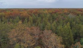 Rural Land for Sale in Adams County, WI