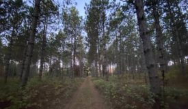 100 Acres of Adams County Hunting and Timber land for Sale