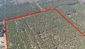 Town of Big Flats 35 acre timber lot for sale in Adams County WI